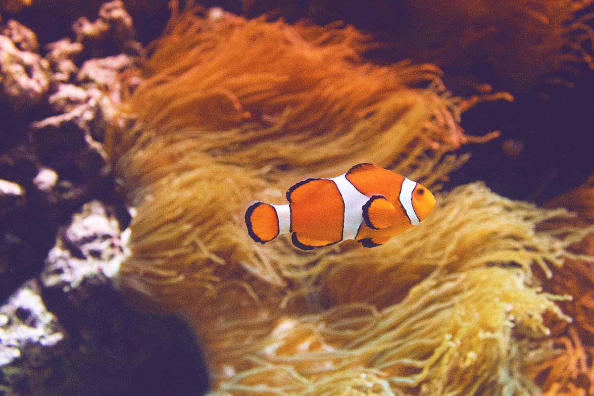 Oceanario-0
