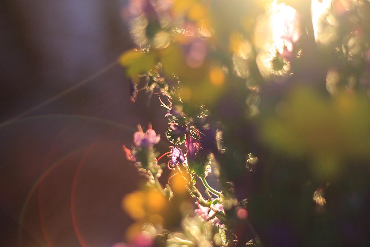 YS-spring-08